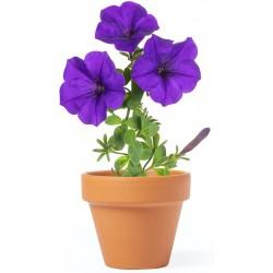 Vaso per piante di petunia